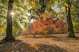 Herbst 021