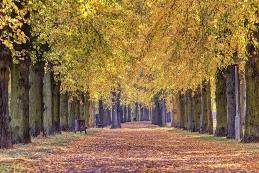 Herbst 019