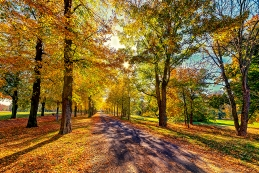 Herbst 020